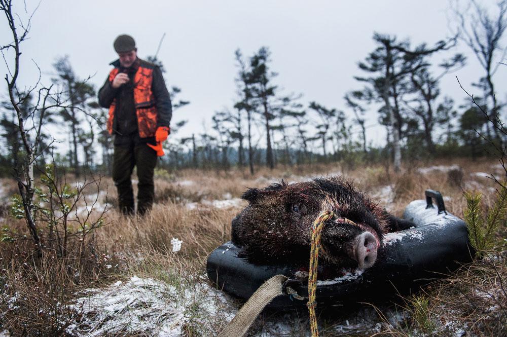 jagt i Sverige