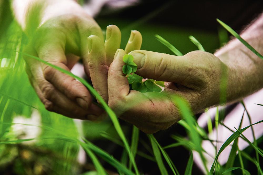 Anret den rørte tatar af sommerbukken oven på friskostecremen, og drys til sidst med friske urter fra skoven.