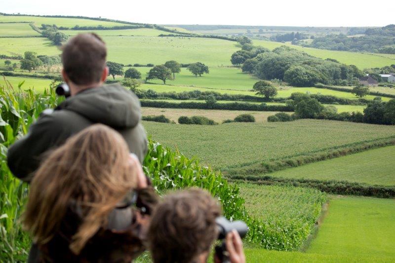Sydengland landskab Dorset