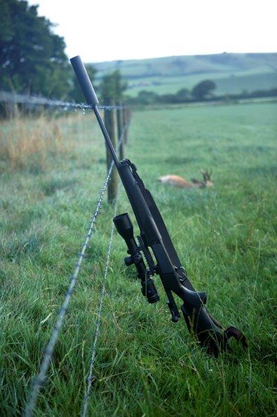 Landsabet i Dorset