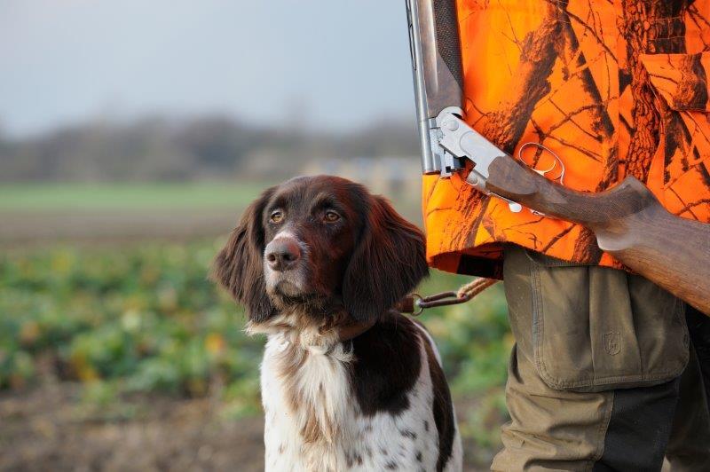 Hunde anvendes ofte på jagt i Tyskland