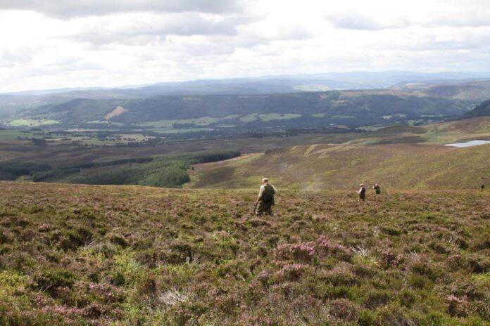 Grouse jagt i skotland
