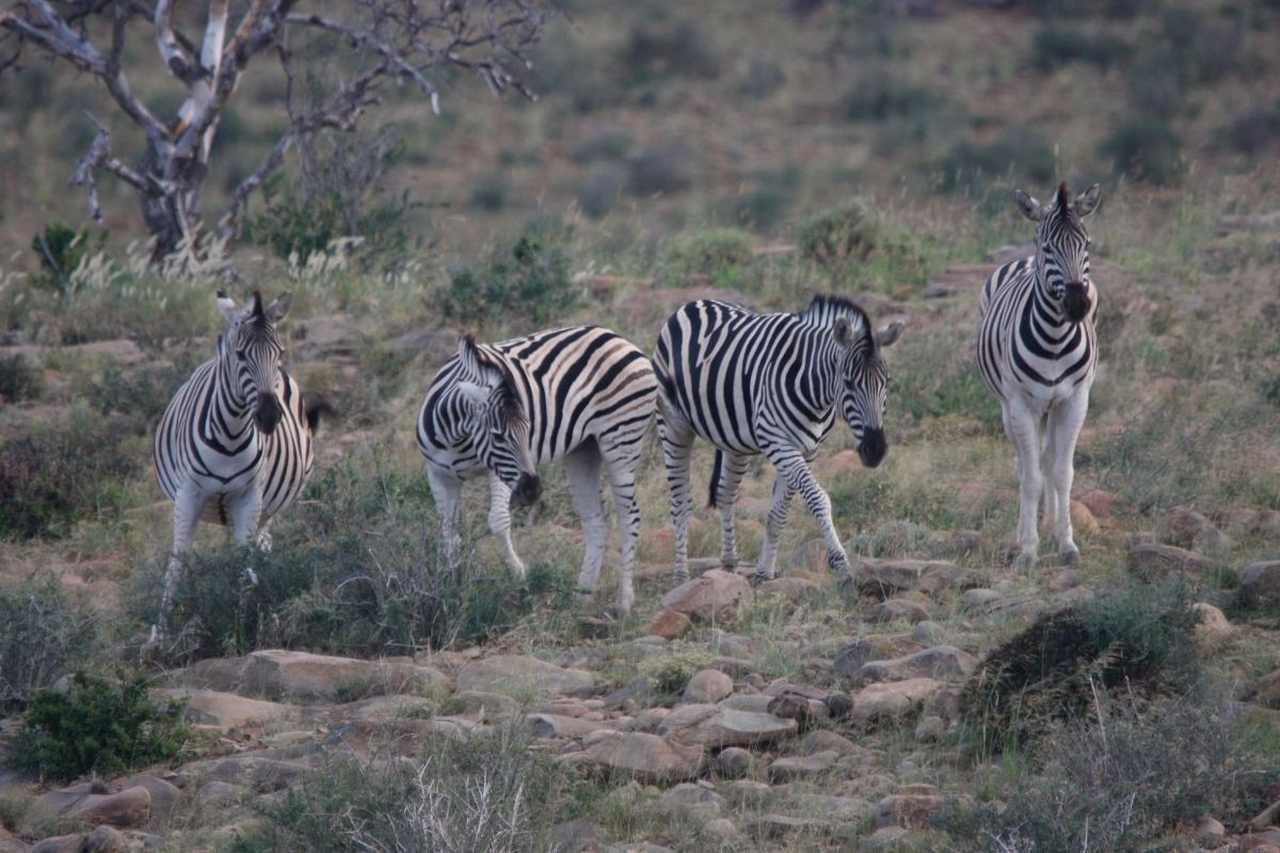 jagtfarm safari