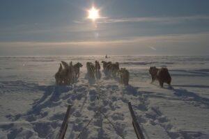 Slædehunde med på vinterjagt