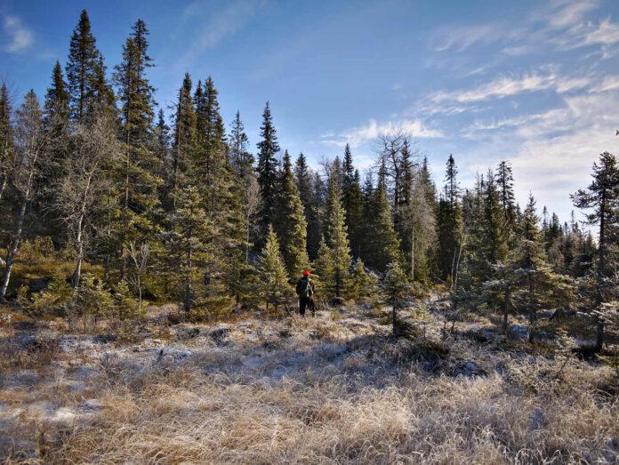 Smukke natur i Finland